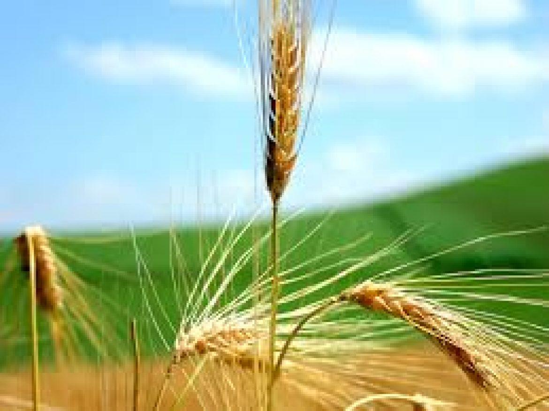BEI: in arrivo 50 milioni di euro a favore dei giovani agricoltori